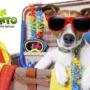 13 Consejos para el cuidado de tu perro este verano.